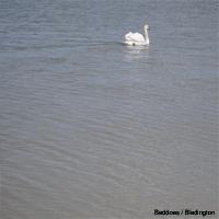 Beddoes - 『Bledington』 [rm 26]